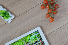 Green garden in your phone and tablet. Cherry tomatoes on a wooden floor. Stock Photos