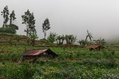 Terraces cultivation in the clouds fog and little farmers houses royalty free stock image
