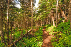 Trail Through a Coastal Forest Royalty Free Stock Photos