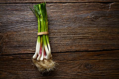 Green garlic bunch on a wooden background Stock Photo