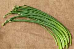 Green garlic chives. On sackcloth Stock Photography