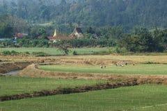 Green garlic plantation Stock Image