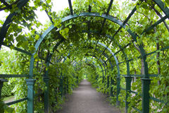 Green gate. Beautiful gate of the greenery in the park Stock Images