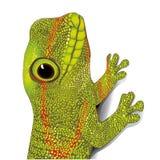 Green gecko Stock Photo