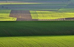 Green Geometry. Grassland, somewhere between the Danube and Black Sea stock photo