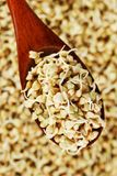 Green germinated buckwheat on a wooden brown spoon. Raw buckwheat. Useful food from buckwheat sprouts for vegetarian food. Green germinated buckwheat on a wooden stock images