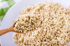 Green germinated buckwheat on a wooden spoon. Raw buckwheat. Useful food from buckwheat sprouts. Green germinated buckwheat on a wooden brown spoon. Raw royalty free stock photo