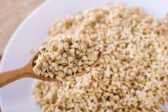 Green germinated buckwheat on a wooden spoon. Raw buckwheat. Useful food from buckwheat sprouts. Green germinated buckwheat on a wooden brown spoon. Raw royalty free stock photos