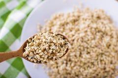Green germinated buckwheat on a wooden spoon. Raw buckwheat. Useful food from buckwheat sprouts. Green germinated buckwheat on a wooden brown spoon. Raw stock photo