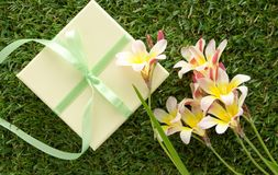 Green gift box with a bow and flowers. Green gift box with a bow and flowers, on green grass Royalty Free Stock Photography