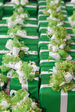 Green gift boxes Stock Image