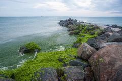 Green gifts of the Black Sea in Bulgaria Stock Image