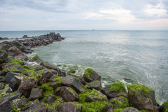 Green gifts of the Black Sea, Bulgaria Stock Photography
