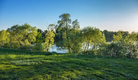 Green glade on the banks of the river Stock Images