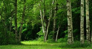Green glade Royalty Free Stock Photography
