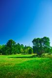 Green glade in countryside Royalty Free Stock Photos