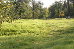 Green glade in park Royalty Free Stock Photos