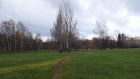 Green glade and the road directly. Autumn, trees without leaves and green grass stock photos