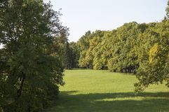 Green glade in the wood Royalty Free Stock Photo