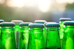 Green glass bottles of beer on the background at sunset Royalty Free Stock Image