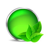 Green glass button. With leaves on a white background vector illustration