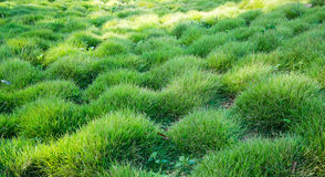 Green glass lawn field Stock Images