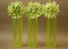 Green glass vase. Stock Images