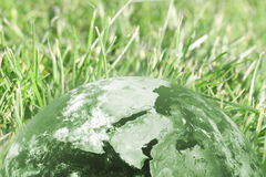 Green globe and grass Stock Photography