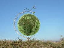 Green globe tree Stock Image
