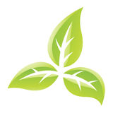 Green Glossy Leaves Icon Royalty Free Stock Photos