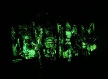 Green glow of bioluminescent mycena stock photo