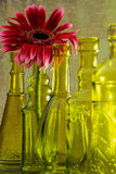 Green Glow. Bright pink gerbera daisy and green vintage style bottles Royalty Free Stock Photo