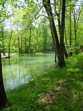 Green glow. Vibrant trees and greenery over blue-green water at Maramec Spring Park in St. James, Missouri stock photo