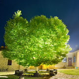 Green glowing tree in the night park Stock Photography