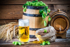 Green and gold are the colors of beer Stock Photography