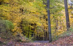 Green and gold fall forest in Michigan USA stock photos
