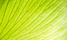 Green gold leaf Stock Images