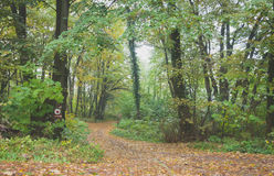 Green, gold and misty autumn, path in forest Royalty Free Stock Photos