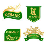 Green and gold paddy rice organic natural product banner vector design Royalty Free Stock Photos