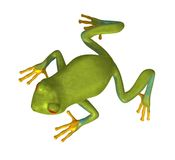 Green Gold Tree Frog 300 dpi Royalty Free Stock Photography