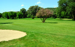 Green golf course, flowering tree and sand pit Stock Image