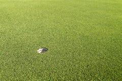 Green in golf course Royalty Free Stock Photos