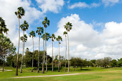Green golf course with palms Royalty Free Stock Photo