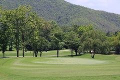 Green golf course Stock Photography