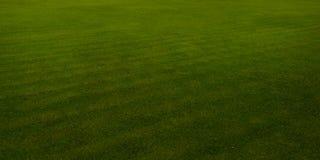 Green Golf course,texture. Stock Photos