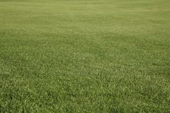 Green golf field stock image