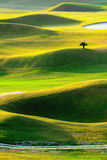 Green golf field with lights and shadows stock photos