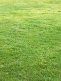 Green golf grass royalty free stock image