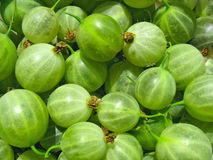 Green gooseberries close up, berry background Royalty Free Stock Photography