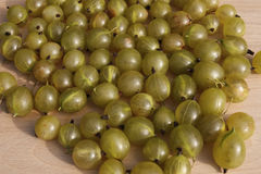 Green gooseberries Stock Image